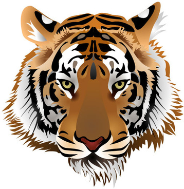 set_of_tiger_vector_picture_art_521147
